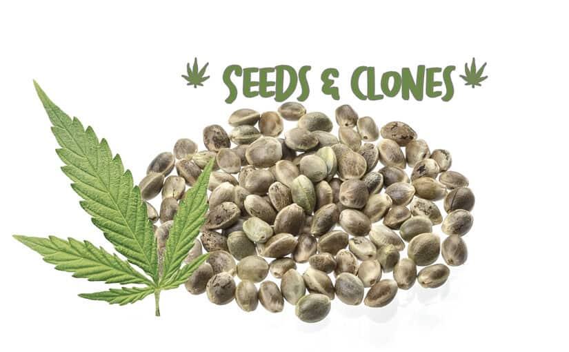 seeds clones tucson where to buy arizona